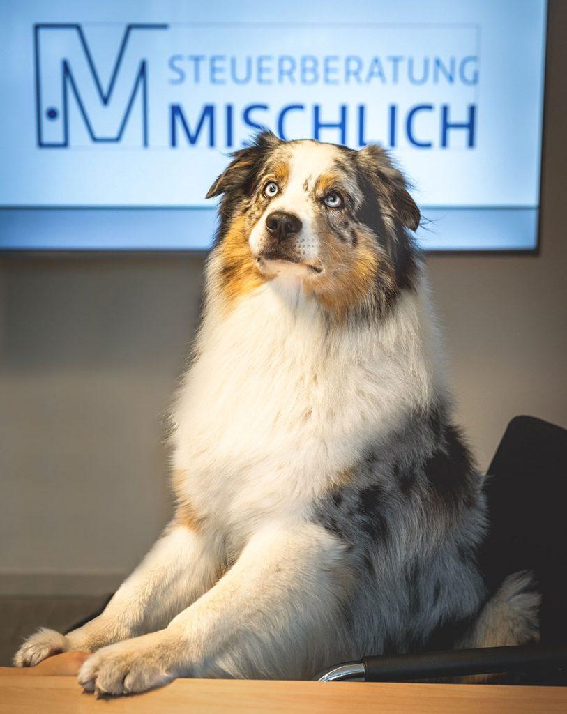 Bürohund Lennox